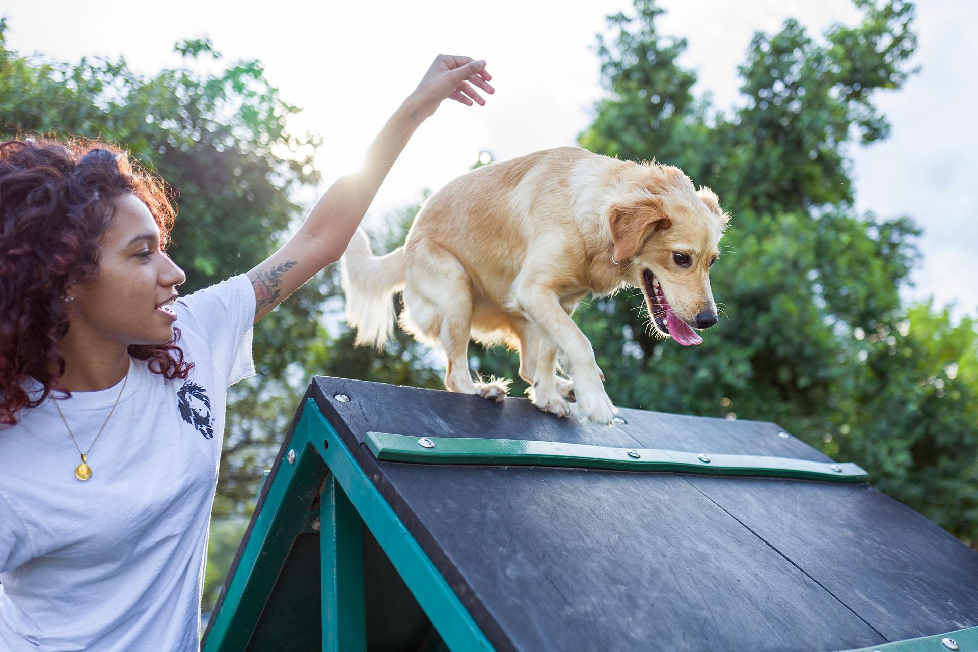 metier-devenir-comportementaliste-canin